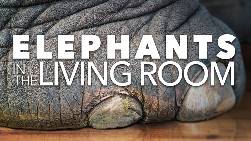 Elephants in the Living Room
